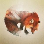 Animales en su hábitat  · Andreas Lie