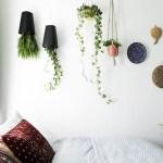 El mito de las plantas en la habitación