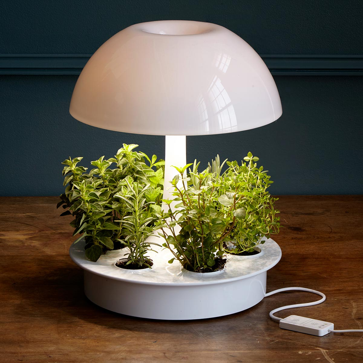 Lamp Plant Ambienta Grow Lamp Plant Light Hydroponics Uncommongoods