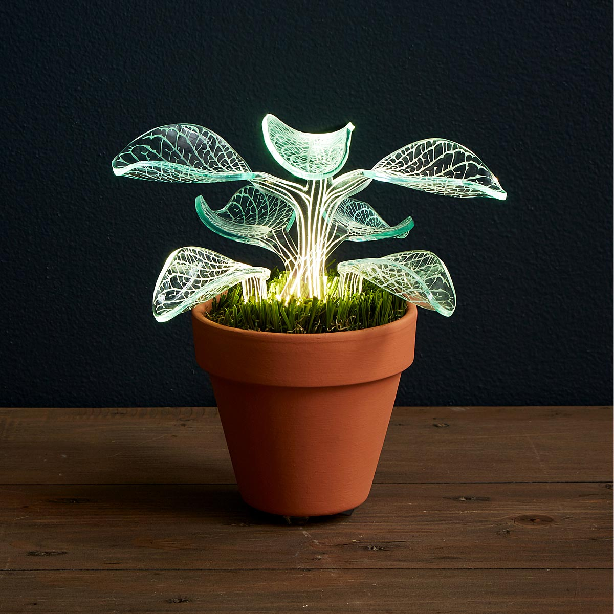 Lamp Plant Let It Glow Lamp Bedside Lamps Indoor Plants Uncommongoods