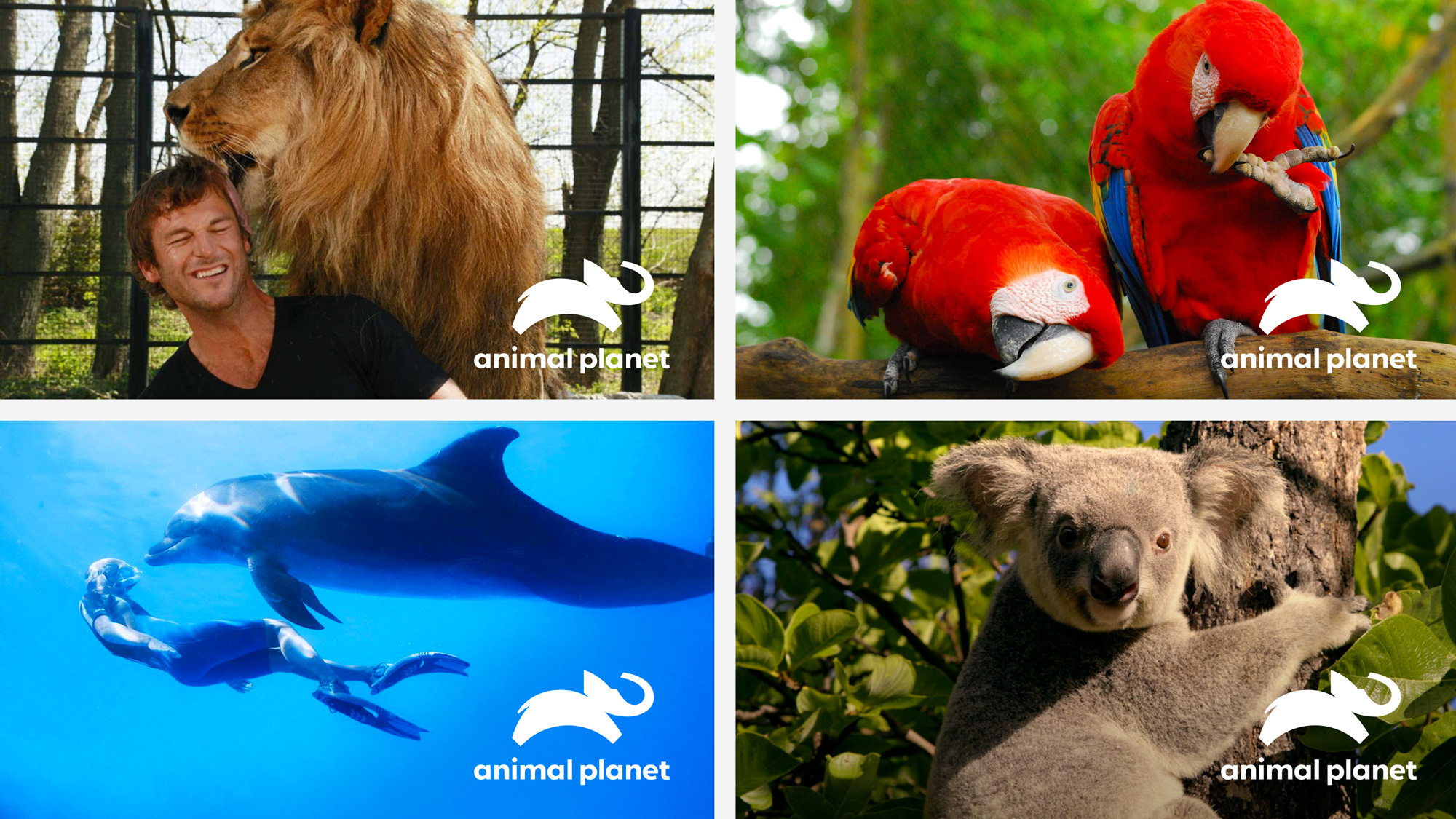 Animal Planet Brand New New Logo For Animal Planet By Chermayeff
