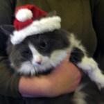 Ingrid in a Santa hat