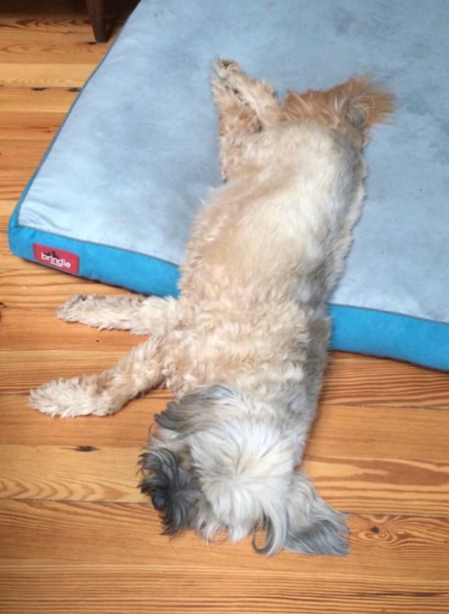 Dalai half on half off bed