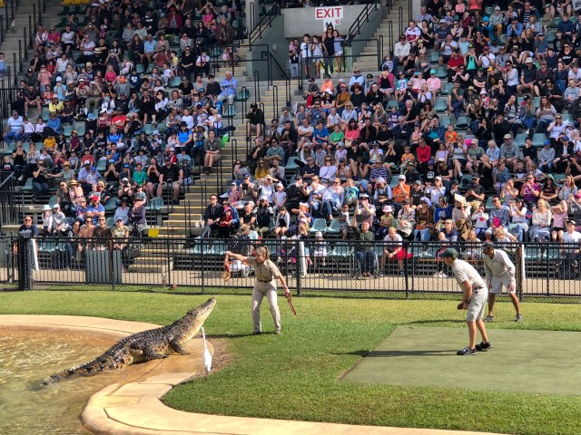 zoo croc show with bird