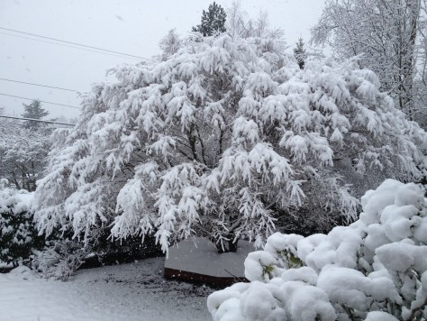 Snow, Lummi Island, WA. Photo by Scarlett Messenger