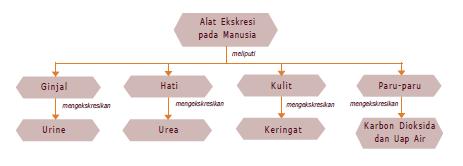 Konsep Sistem Sastra Kritik Sastra Wikipedia Bahasa Indonesia Ensiklopedia Bebas Bab 1 Sistem Ekskresi Manusia United Science