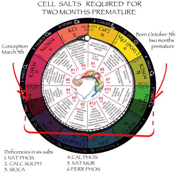 Cell / Tissue Salts Universal Truth School