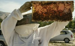 A BYU beekeeper holds a frame of red honey. This honey is currently being researched to look at differences and safety. (Photo courtesy of William J. Burnett)