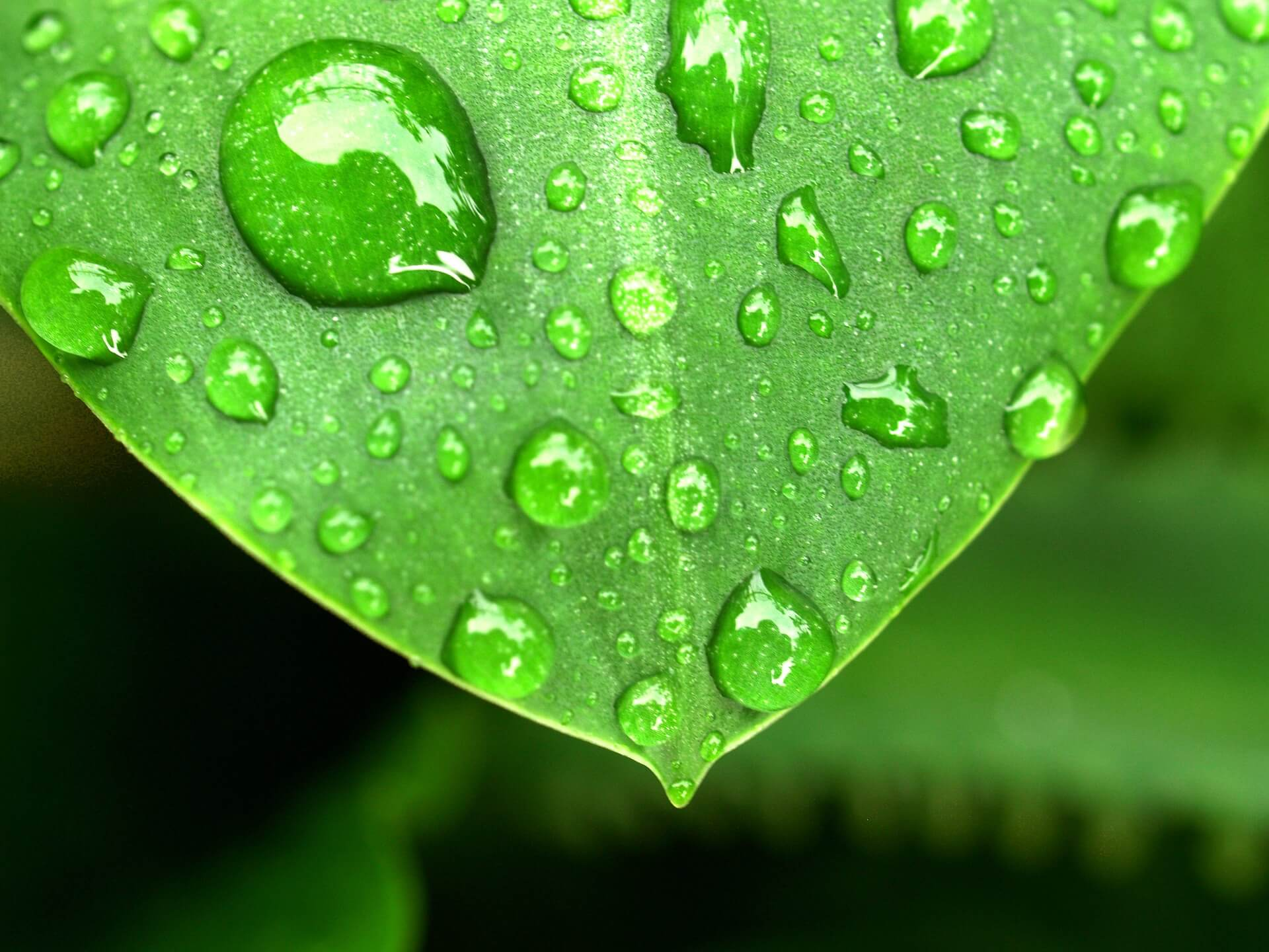 Drop Of Water Falling From A Leaf Wallpaper The True Costs Of Greenhouse Humidity Control Upstart