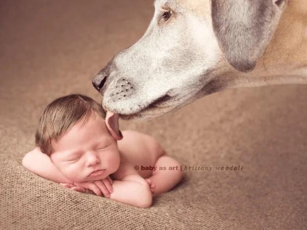 cane lecca bambino