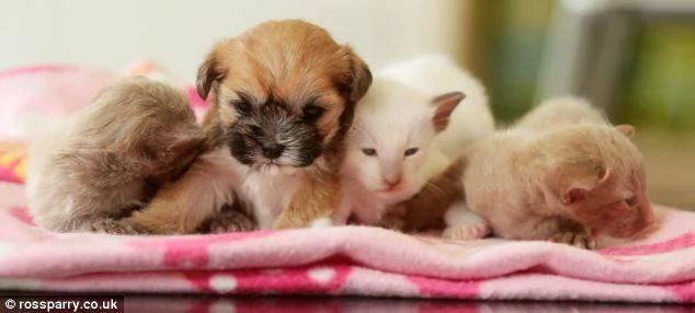 cuccioli gatto e cane