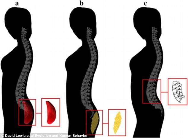 curvatura spinale esperimento