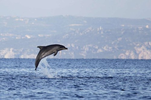 observer les dauphins en corse