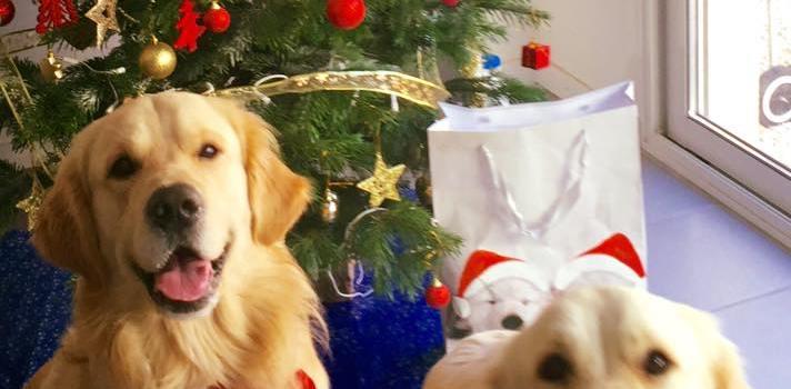 chien cadeau Noël