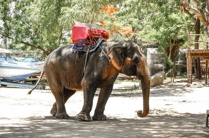 pires attractions touristiques avec des animauxs