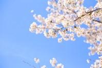 春一番の条件は?関東・関西だけにしかない?衝撃の事実を簡単解説
