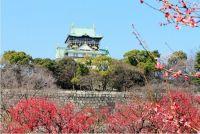 大阪城公園 梅林2015の駐車場・アクセス情報は?現在の開花状況は?