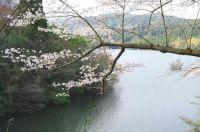 【鹿児島】桜の見ごろはいつ?│2015オススメ名所スポット11の開花・駐車場情報