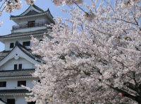 【佐賀の桜】ライトアップされる穴場スポットはココ!│開花情報2015