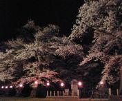 兵庫 桜の名所ランキング2015!オススメ花見スポットはどこ?