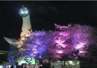 大阪 桜 ライトアップされる名所・穴場は?│夜桜が楽しめる時間は何時まで?