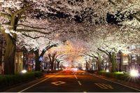 茨城の桜 ライトアップや桜まつりが開催される名所はどこ?開花&駐車場情報