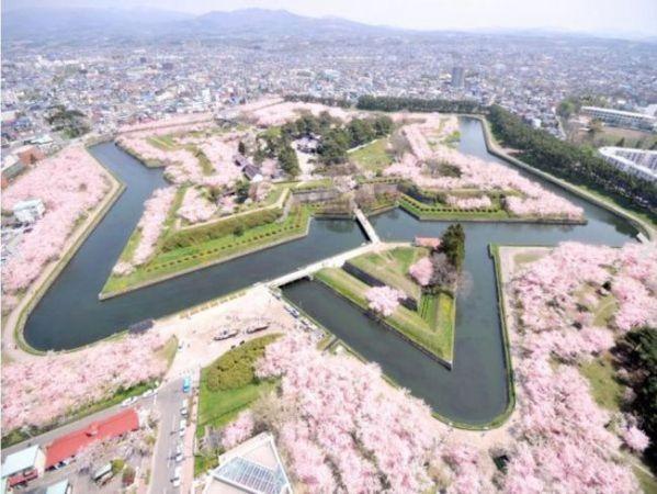北海道 桜2015名所・穴場の見頃は?オススメ時期&ライトアップ情報