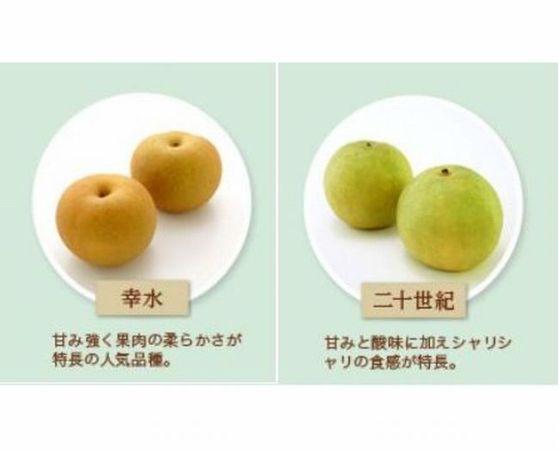 梨「幸水」「二十世紀梨」「豊水」の違いは?価格差は?味の特徴は?どっちがオススメ?