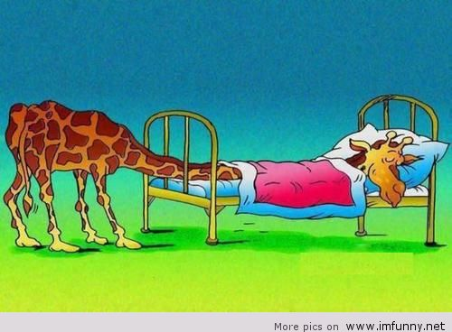 how long do giraffes sleep a day