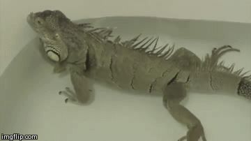 iguanas can hold their breath for 28 minutes
