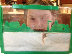 sand versus gel ant farm experiment, getting started