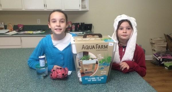How to Set Up a Home Aquaponics Kit