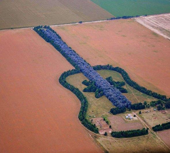 Pedro_ureta_argentina_forest-guitar1