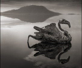 © Nick Brandt 2013 Courtesy of Hasted Kraeutler Gallery, NY