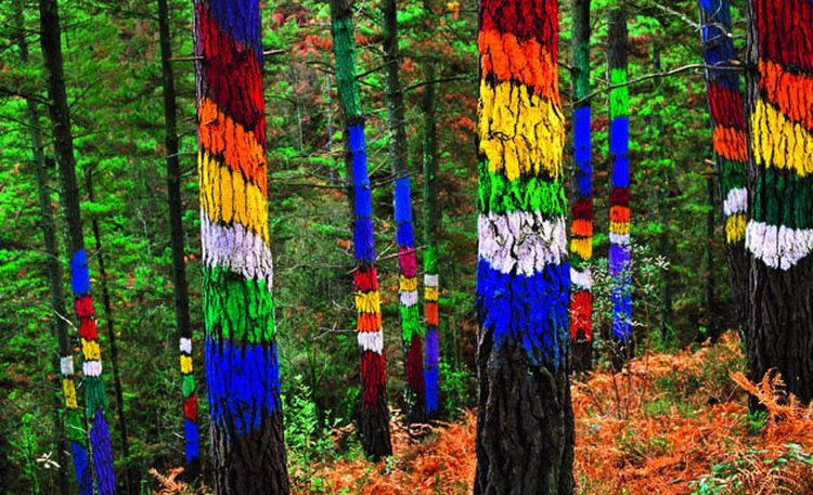 Arboles Secos Pintados The Painted Forest Of Oma | Unusual Places