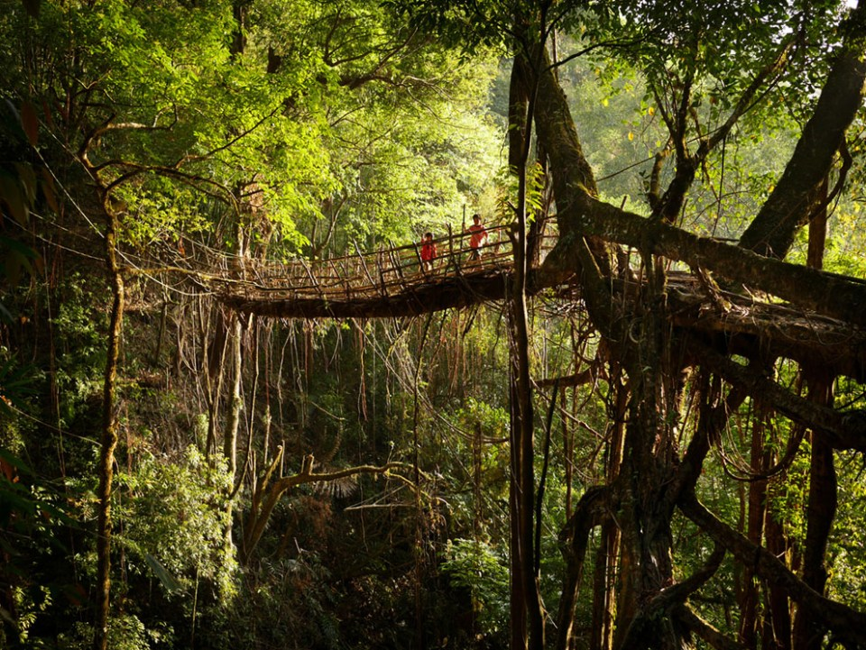 Local boys walk over a tree root bridge currently being forged, deep in the jungle near Mawsynram. The skeleton of the bridge is bamboo, with tendrils from the surrounding rubber trees are being fixed onto the structure strand by strand. By the time the bamboo has rotted away, within 6-8 years, locals say the roots of the tree will be able to bear a person's weight. (© Amos Chapple)