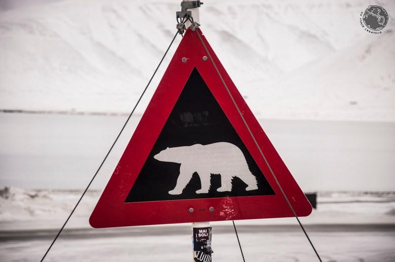 Oso polar Svalbard