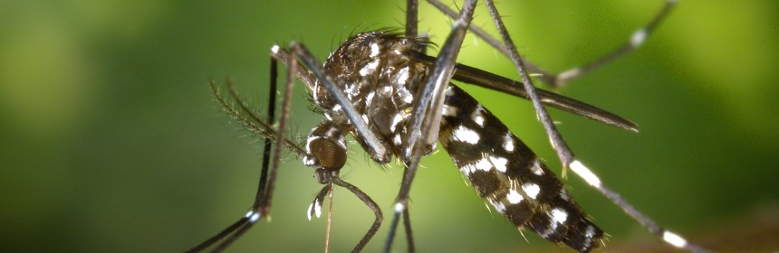 The Zika virus is most commonly spread through mosquitoes in Central American countries.