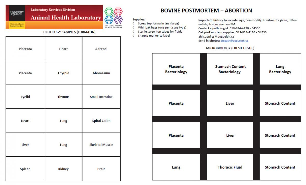 Bovine Abortion Diagnostic Plan April 1 2018 Animal Health Laboratory