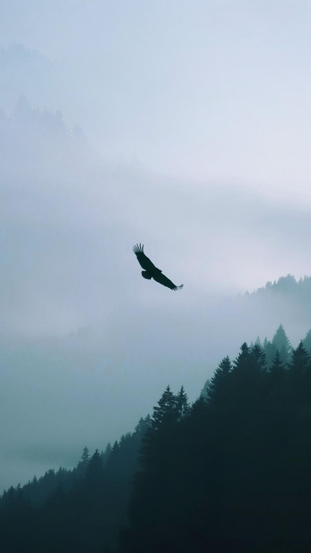 Iphone Plus Wallpaper 鹰飞越迷雾森林 锁屏图片 高清手机壁纸 动物 回车桌面