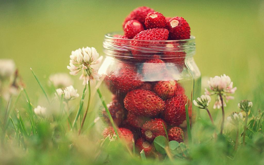 Cute Rose Wallpaper 唯美清新的草莓 高清壁纸图片 水果蔬菜 回车桌面