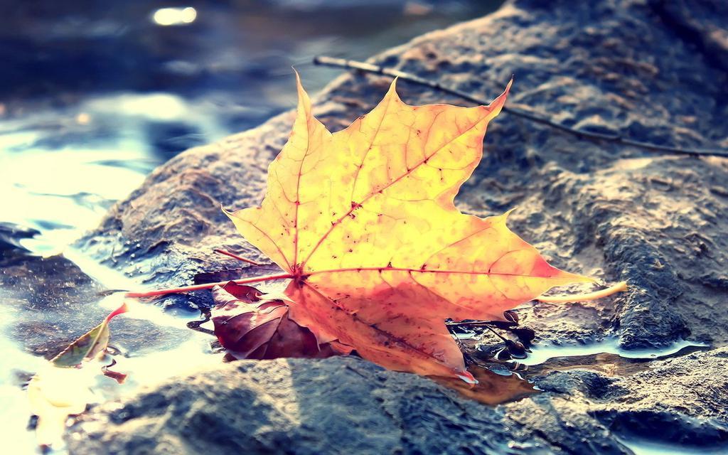 Pretty Fall Wallpapers 秋天唯美意境美图 高清壁纸 风景图片 回车桌面