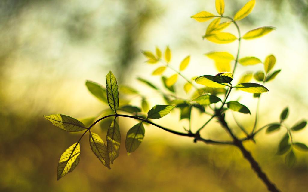 Wallpaper Iphone X Full Hd 阳光下的叶子 高清壁纸图片 植物绿叶 回车桌面