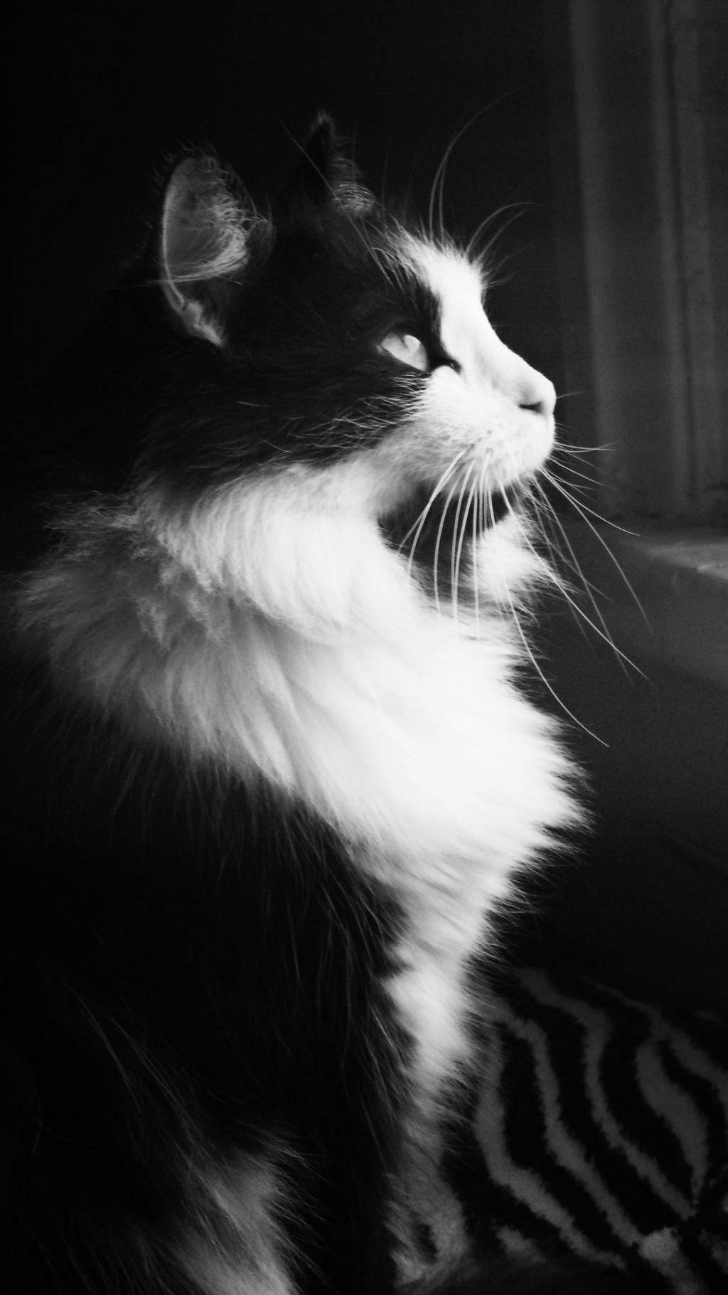 Htc One Wallpaper Hd 望向窗外的猫 锁屏图片 高清手机壁纸 动物 回车桌面
