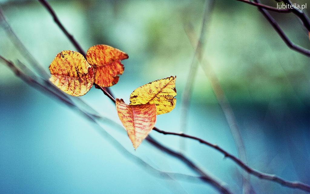 Fall Leaves Hd Wallpaper 落叶中的伤感 高清壁纸 风景图片 回车桌面