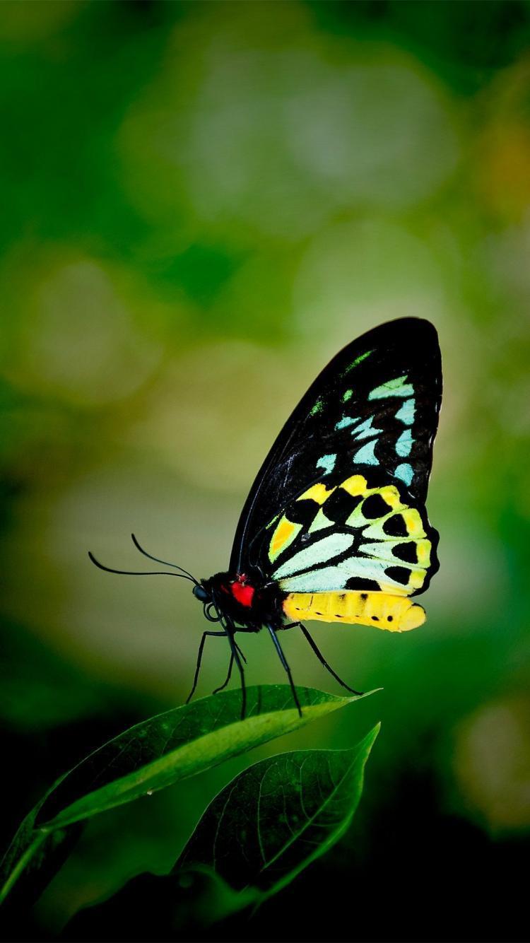 Nature Hd Wallpapers For Iphone 唯美的蝴蝶 锁屏图片 高清手机壁纸 动物 回车桌面