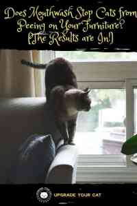 Using Mouthwash to Stop Cats from Peeing on Furniture (It ...