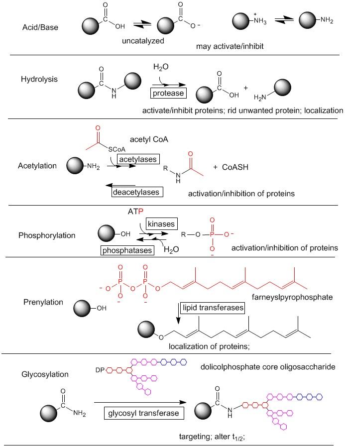 Post-Translational Modification - Biochemistry - Medbullets Step 1