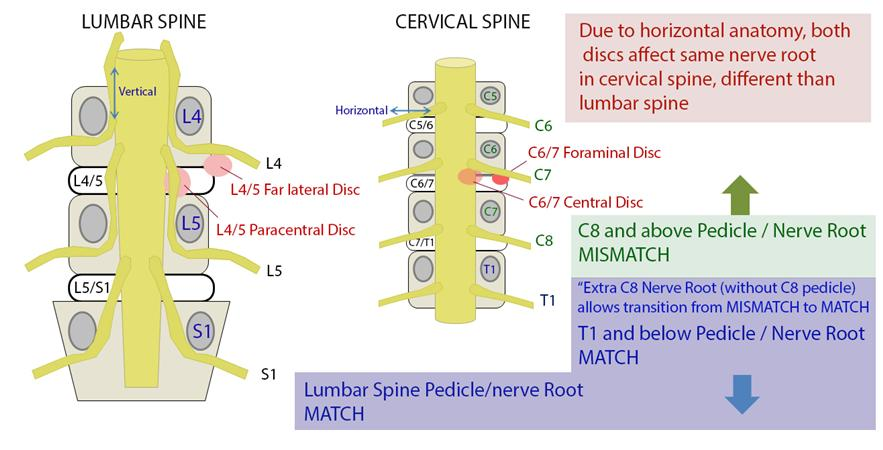 Neck  Upper Extremity Spine Exam - Spine - Orthobullets