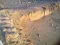 من أساسات قصر منيف في تربة البقوم.jpg